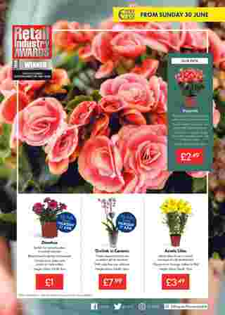 Lidl - promo starting from 27.06.2019 to 03.07.2019 - page 17.